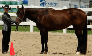 showmanship_at_halter