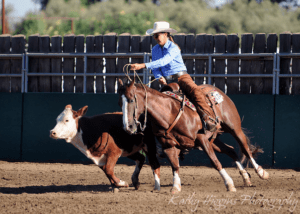 working_cow_horse