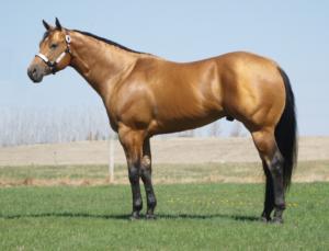 quarter_cavallo