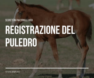 Registrazione Puledro