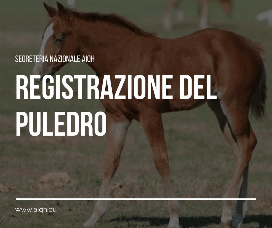 Registrazione Puledro