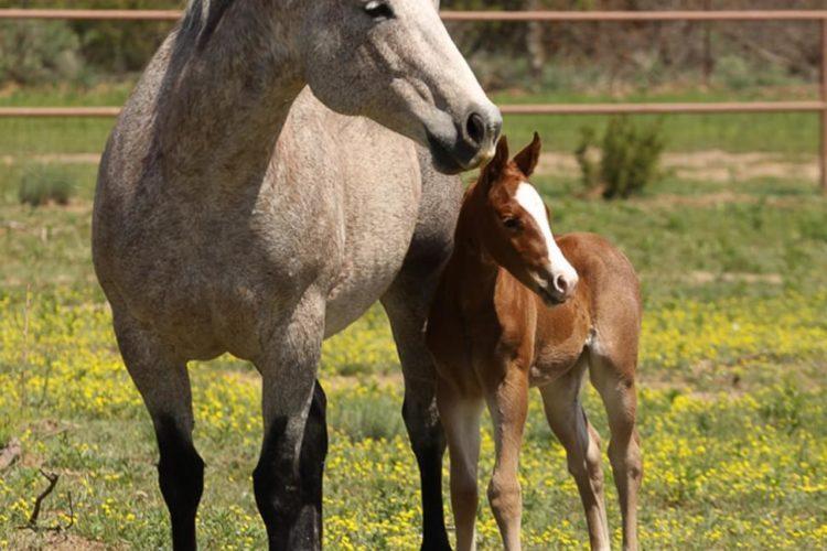 Sei proprietario di uno stallone?